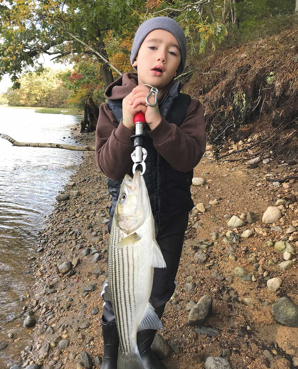 Early spring stripers are generally sub-legal in New England