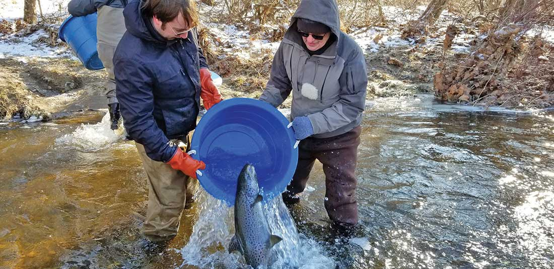 Some states in New England stock Atlantic salmon to support a directed fishery.