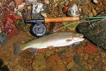 the purchase of a freshwater fishing license and trout stamp