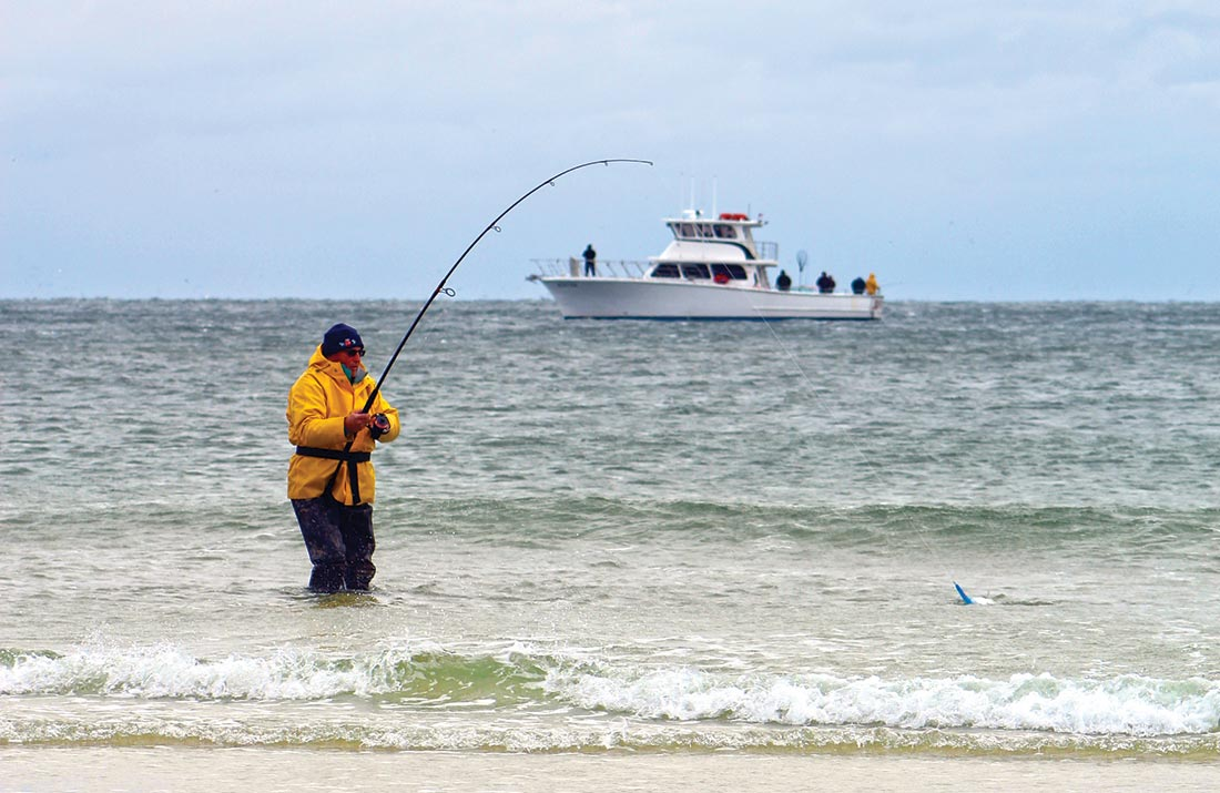 In the surf, blues are often accommodating when stripers are not.