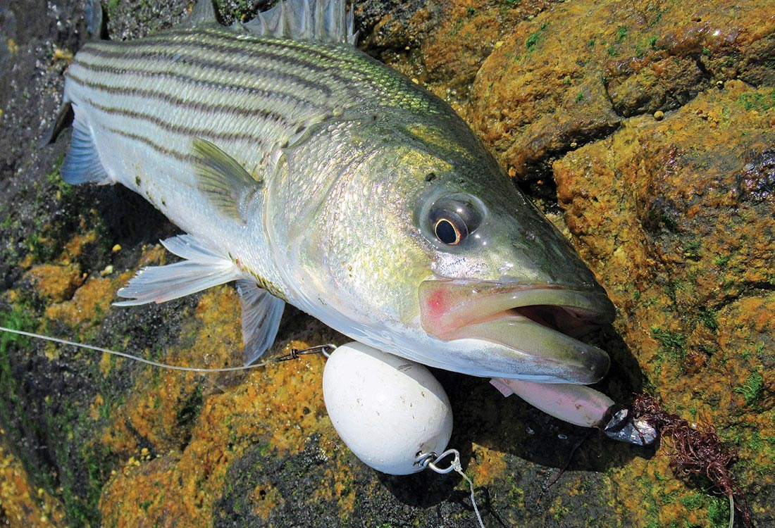 When fishing shallow, rocky areas, consider using a float and jig