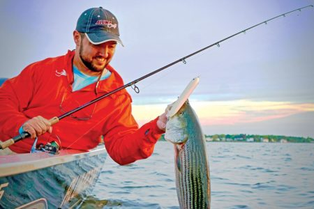 Where migrating striped bass cross paths with spawning-run baitfish, anglers reap great rewards.