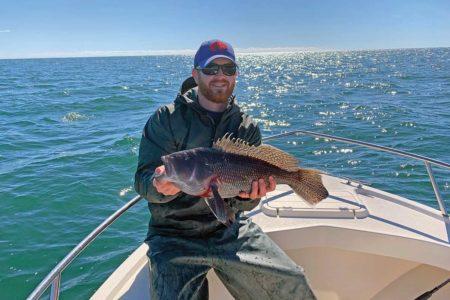 hefty keeper black sea bass
