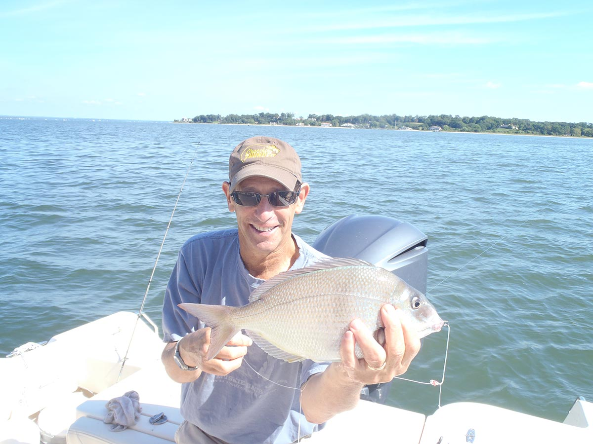 There's plenty of porgies around like this one to provide anglers with an opportunity to harvest selectively.