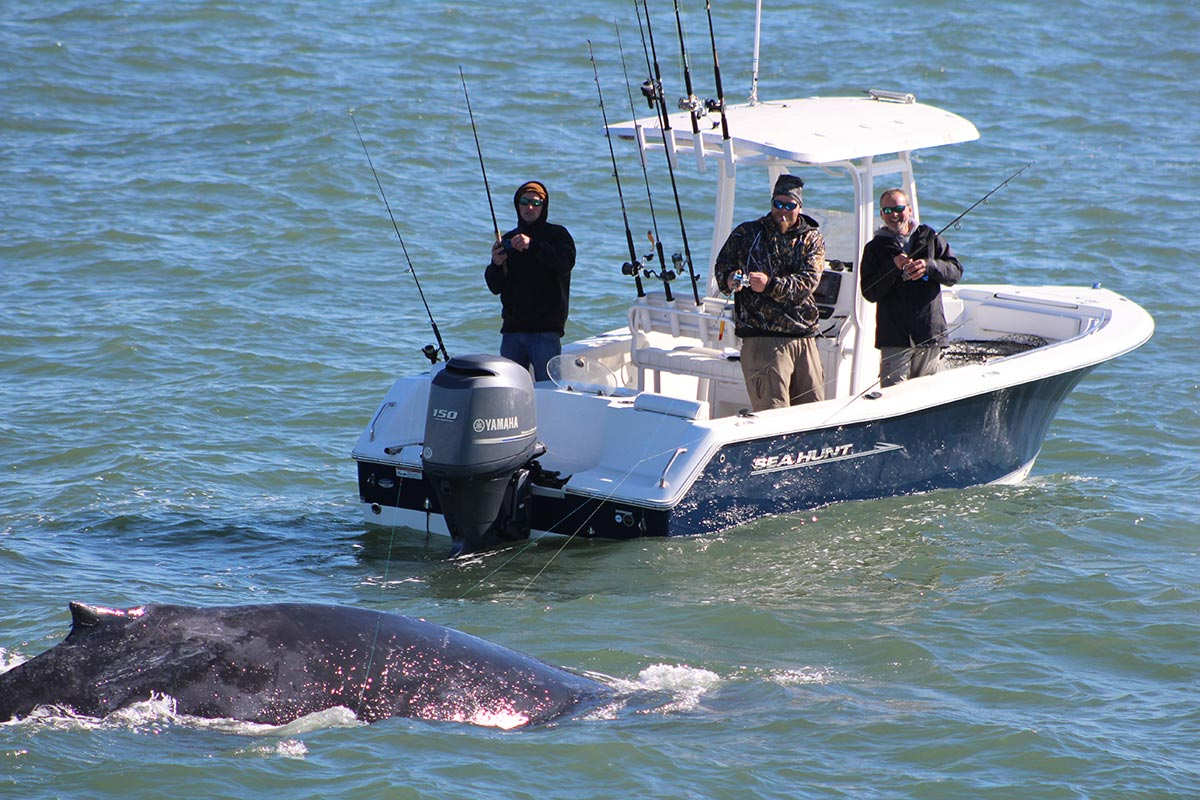 Take care to avoid hooking or entangling whales in fishing line.