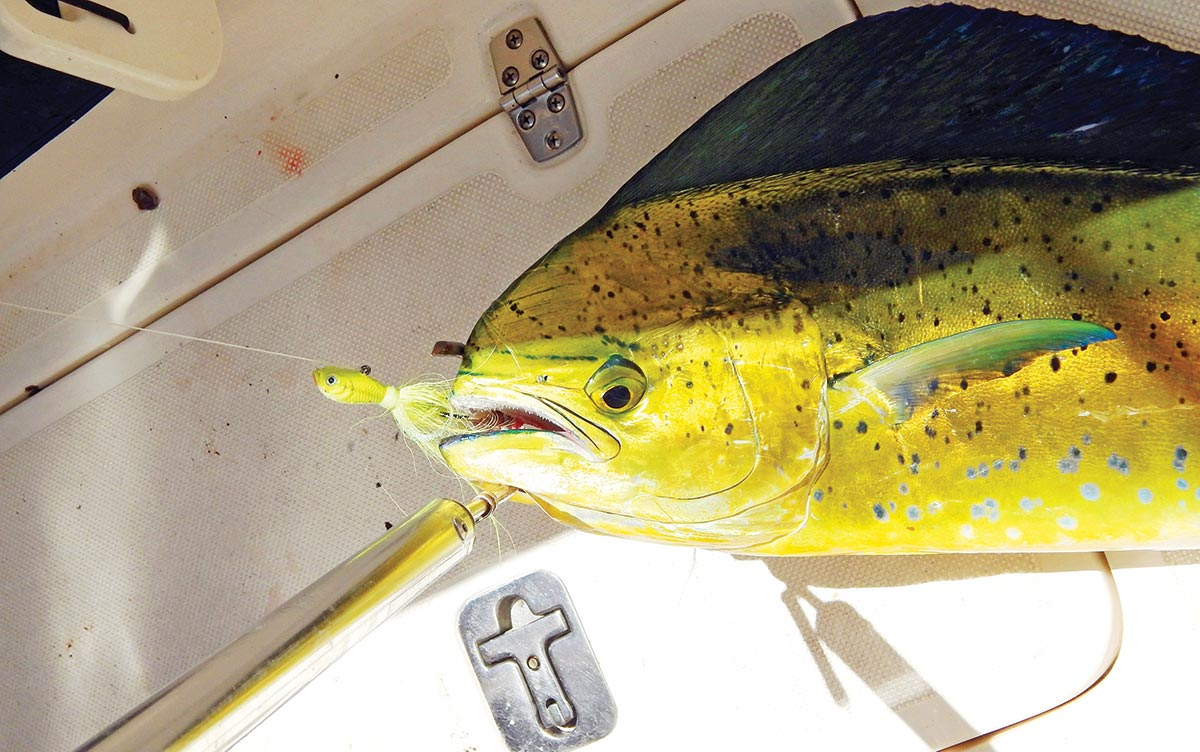 Casting a SPRO Prime Bucktail to a weedline produced this nice mahi.