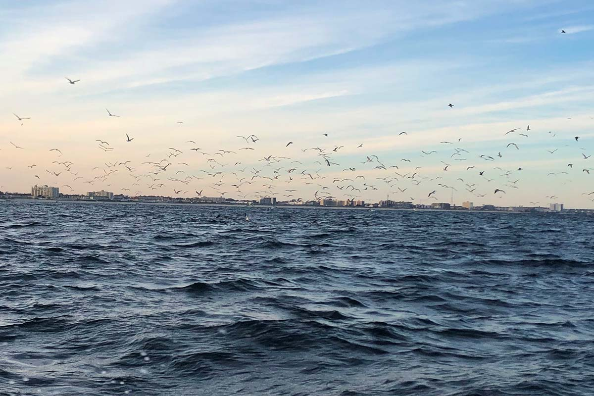 Find the birds, find the bait