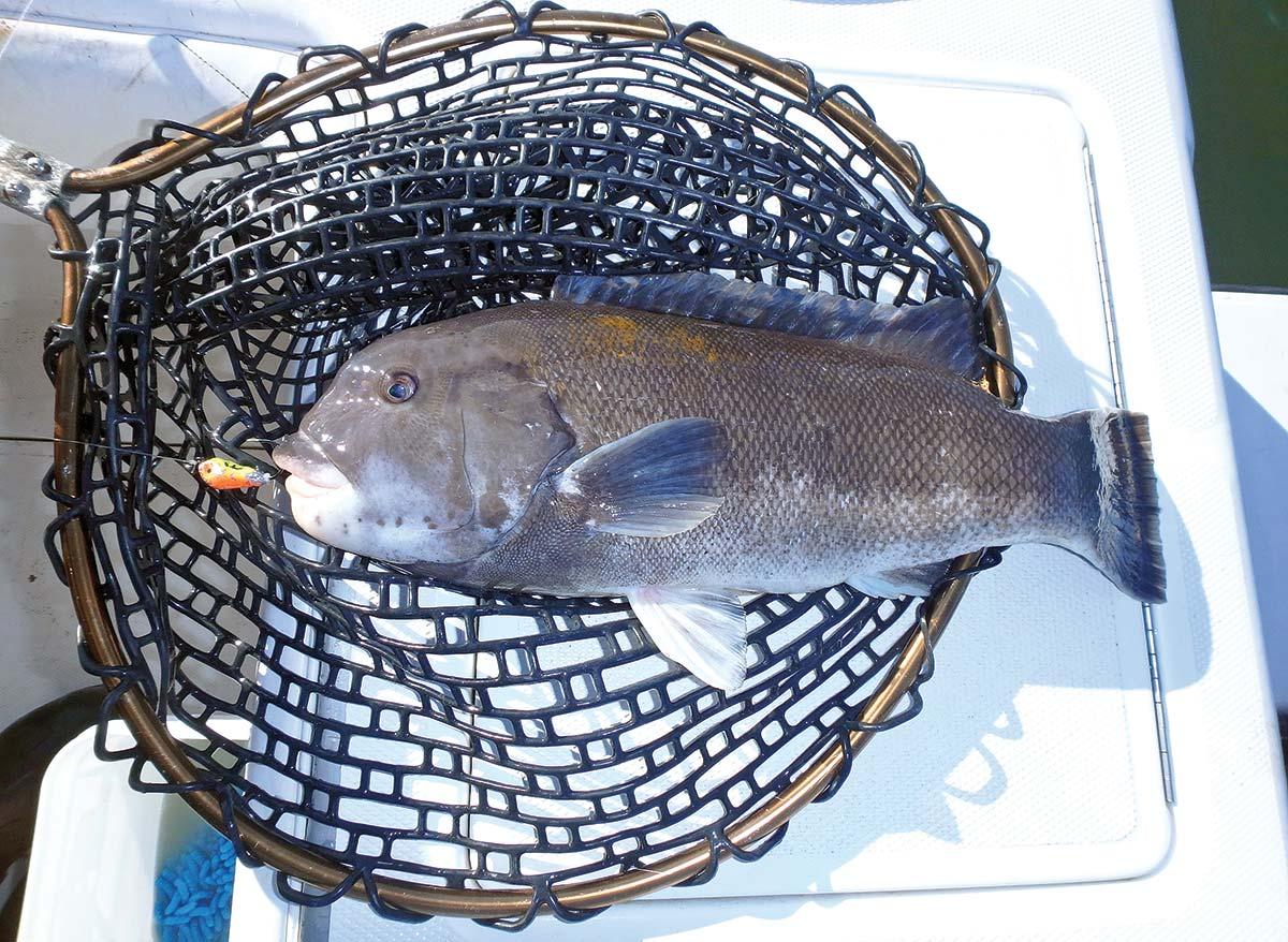 author prefers to use blackfish jigs