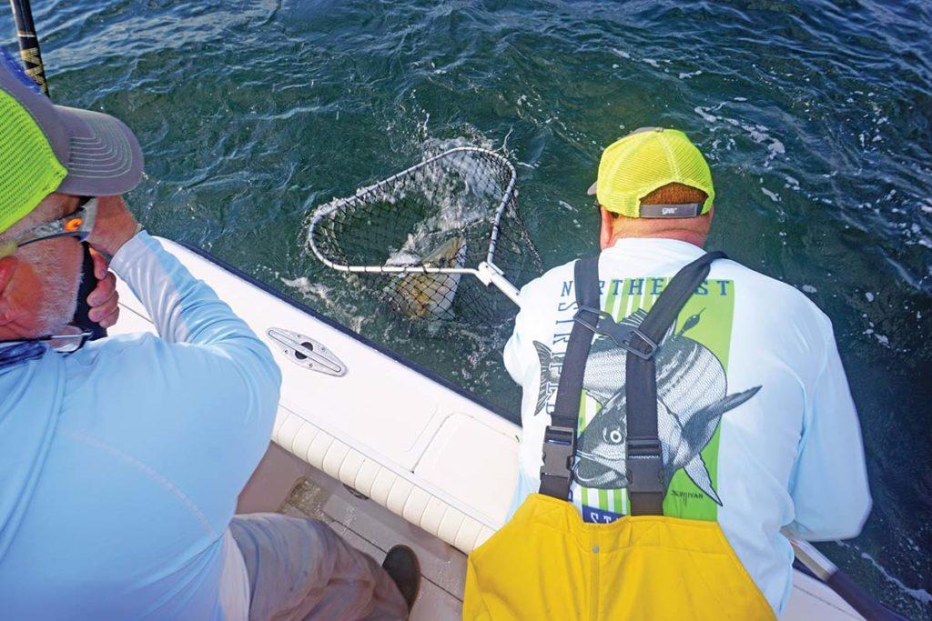 Many Nets Glassberg Fish