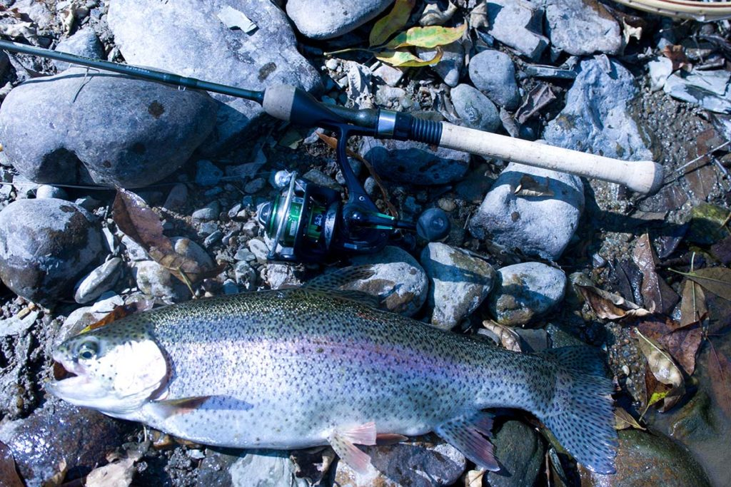 Sure there are fewer trout stocked