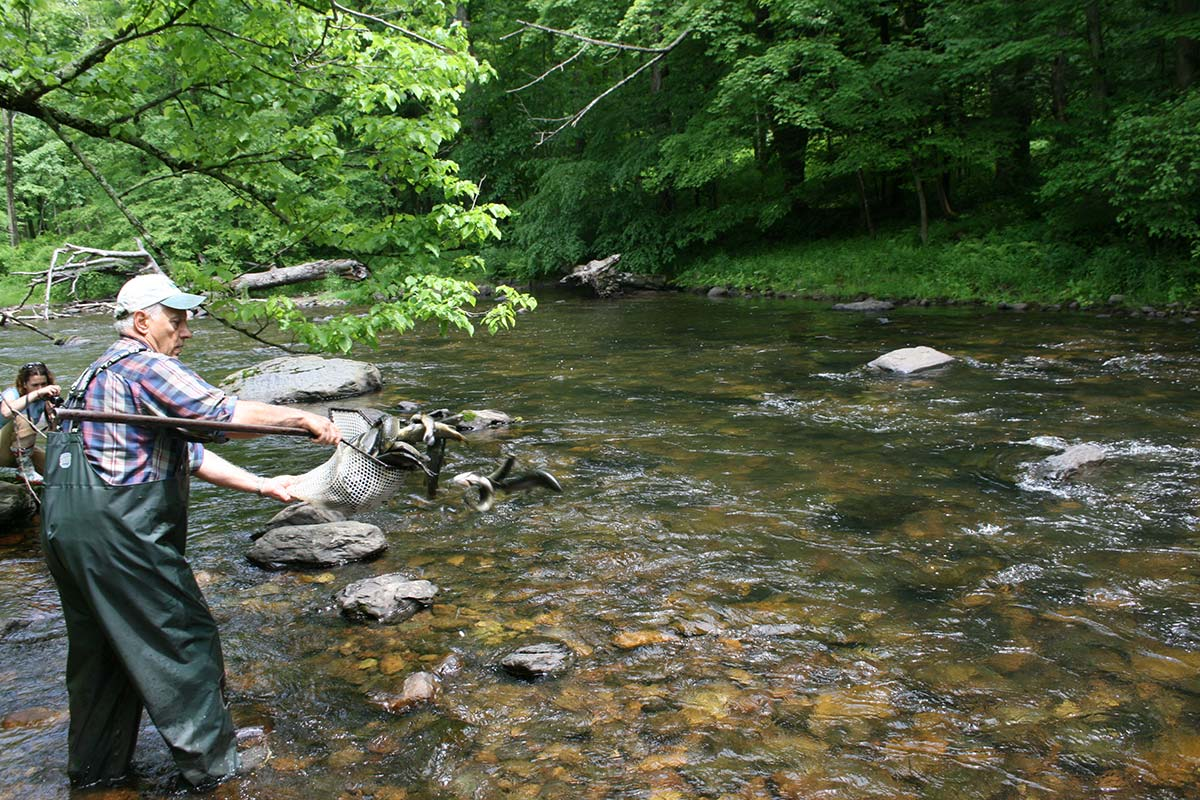 Another liberal dose of hatchery raised trout