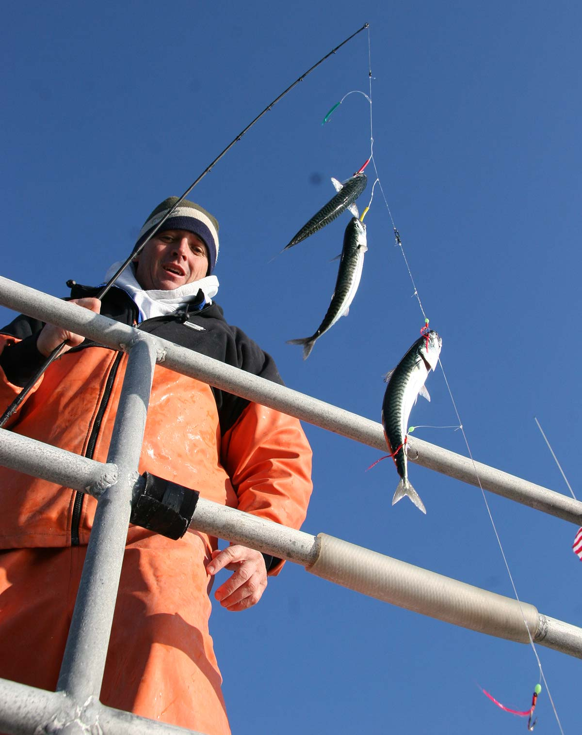 standard Christmas tree rig back into action for winter mackerel this month