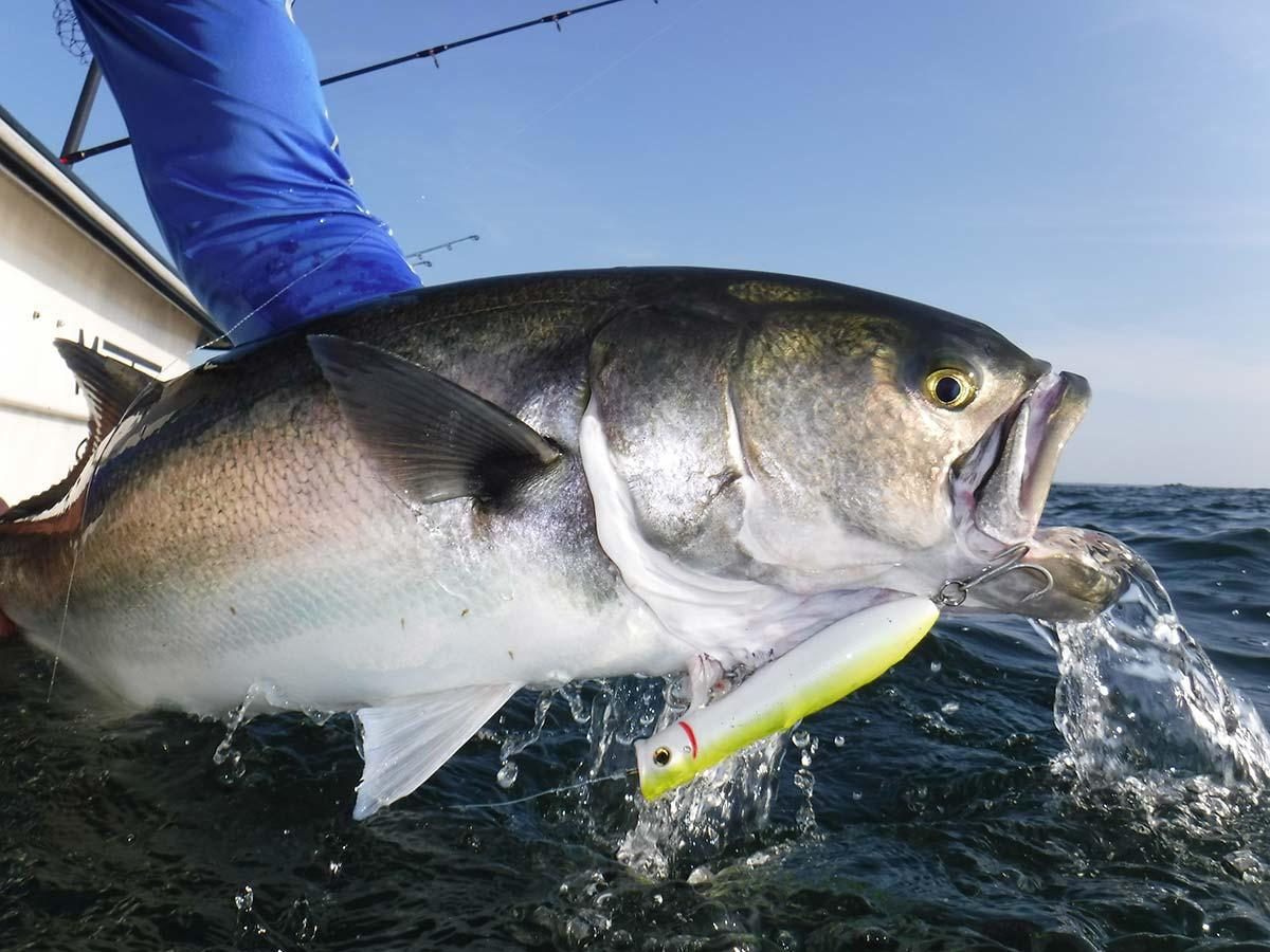 photogenic fish