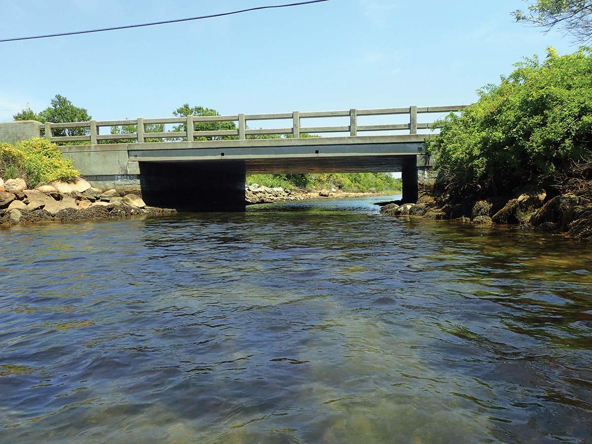 Fish Under Bridge