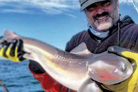 Spiny Dogfish Livornese THE AUTHOR