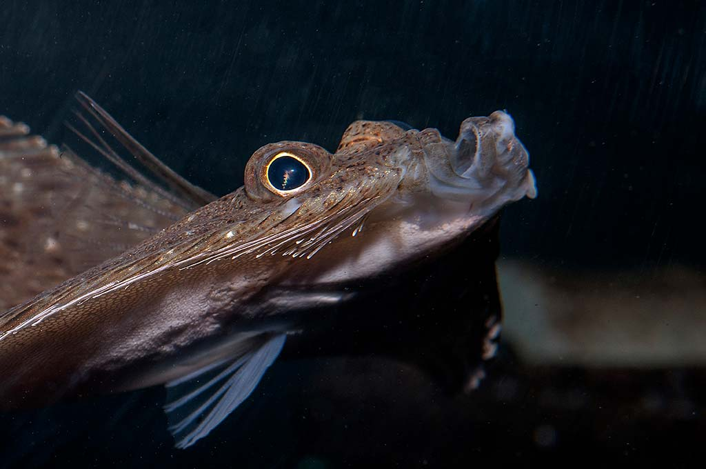 windowplane-flounder